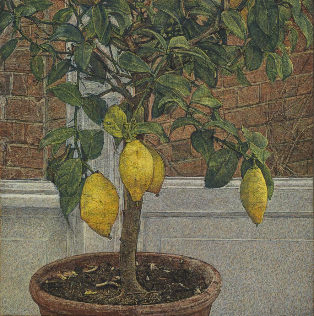 Lemon Tree : Messums London